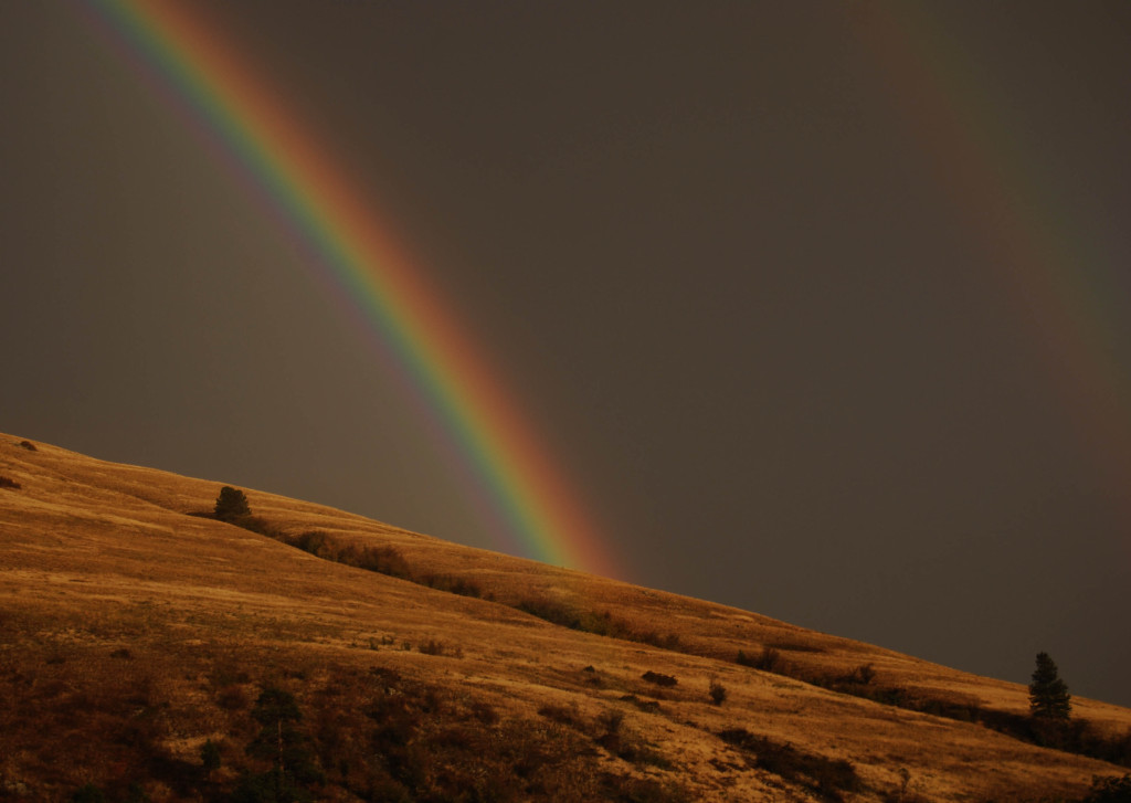 Jumbo Rainbows sm